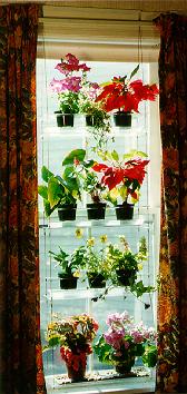 Indoor Window Gardening With Indoor Window Plant Hangers
